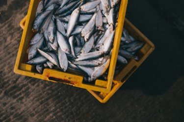 【グルメ必見】豊洲市場で魚を買う方法【寿司・ランチだけじゃない】